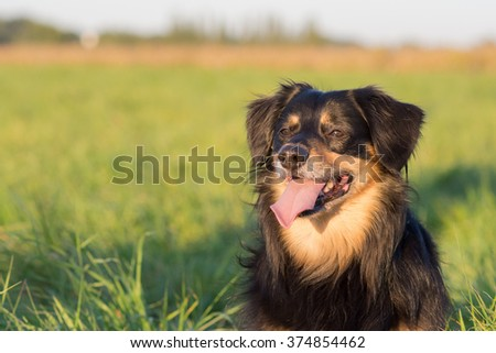 Portrait of a dog who looks carefully - stock photo