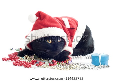 portrait of a dressed black cat in front of white background