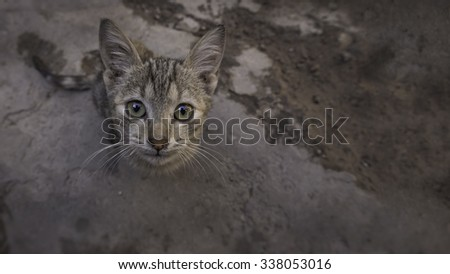 Portrait of a ferrell, or street kitten looking up, directly at the camera - stock photo