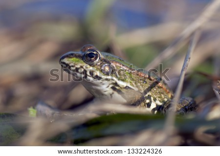 portrait of a frog