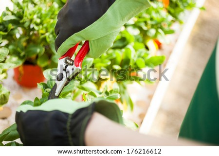 Portrait of a gardener trimming a plant - stock photo
