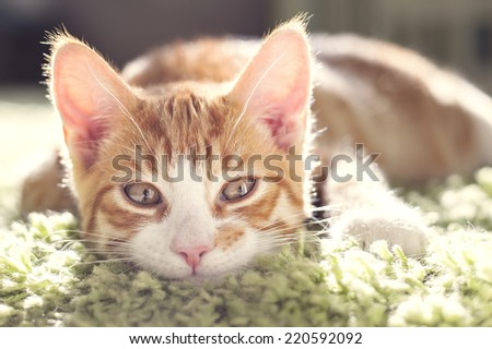 Portrait of a ginger cat lying down.  - stock photo