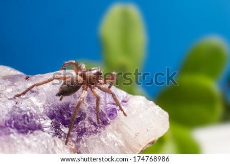 Portrait of a Ground wolf-spider - stock photo