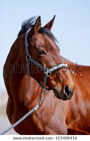 Portrait of a horse against the blue sky - stock photo
