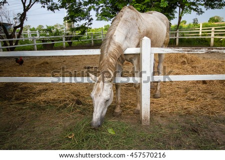 Portrait of a horse in the farm.  - stock photo