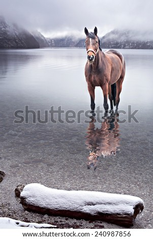 portrait of a horse in the water of a lake - stock photo