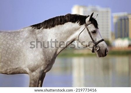 Portrait of a horse on a city background - stock photo