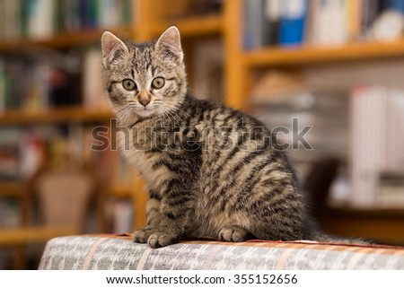 Portrait of a little cat looking at the camera  - stock photo