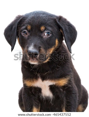 Portrait of a little homeless puppy on white background