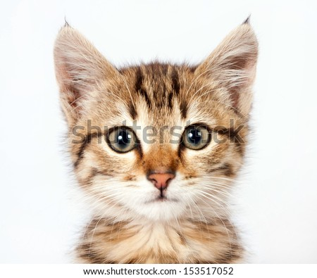 Portrait of a little tabby kitten closeup - stock photo