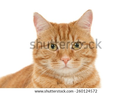 Portrait of a looking ginger cat, isolated on white - stock photo