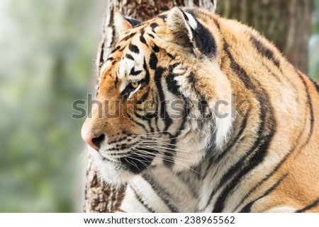 Portrait of a majestic tiger in jungle - stock photo