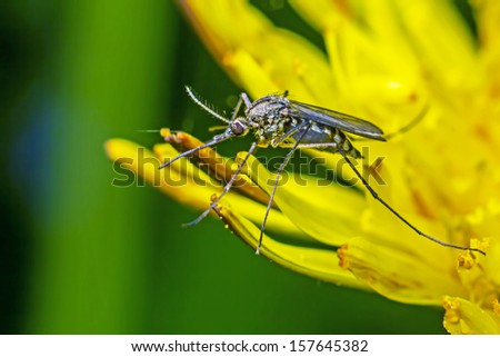 Portrait of a mosquito - stock photo