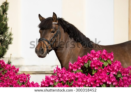 Portrait of a nice pony in rhododendron - stock photo