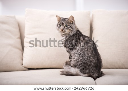 Portrait of a pretty cat is sitting on a sofa. - stock photo
