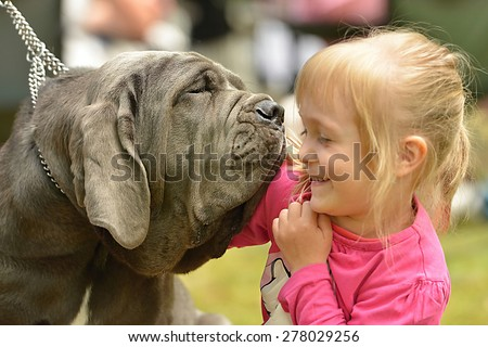 Portrait of a purebred dog Neapolitan Mastiff with little girl - stock photo