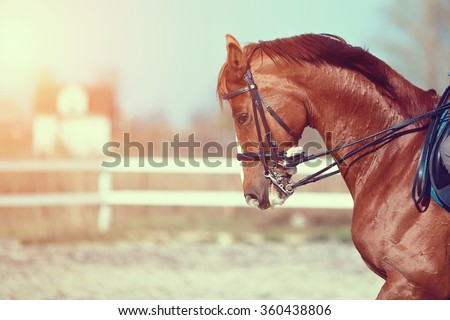 Portrait of a red sports horse on an arena. - stock photo