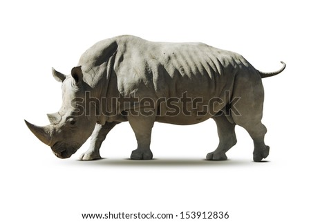 Portrait of a rhinoceros on - isolated - stock photo