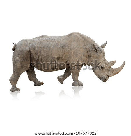 Portrait Of A Rino On White Background - stock photo