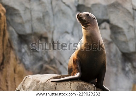 portrait of a sea lion with room for text