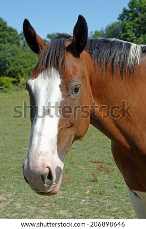 Portrait of a skewbald horse in a summer paddock - stock photo