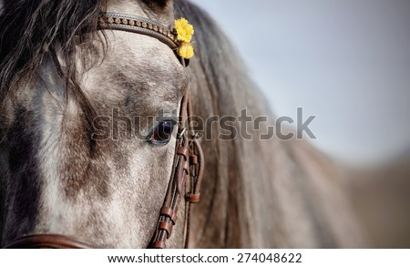 Portrait of a sports horse in a bridle.