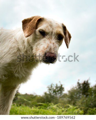 Portrait of a stray dog �¢??�¢??outdoors - stock photo