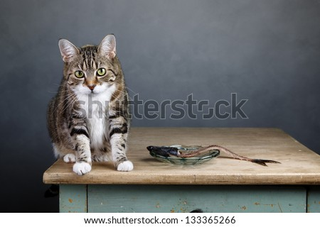 Portrait of a three colored housecat sitting on table with an eaten herring looking guilty towards the viewer - stock photo