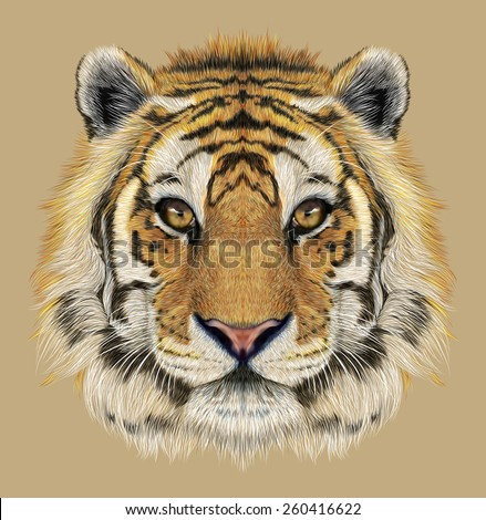 Portrait of a Tiger. Beautiful face of big cat. - stock photo
