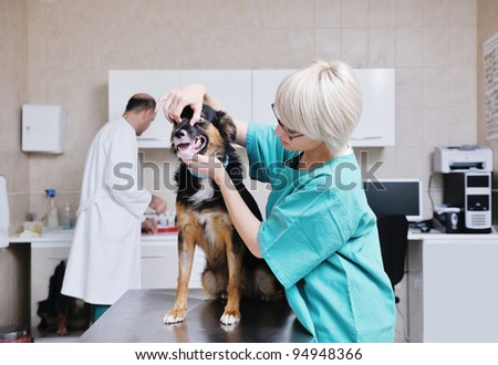 portrait of a veterinarian and assistant in a small animal clinic at work