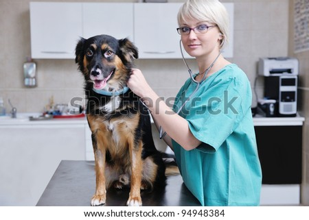 portrait of a veterinarian and assistant in a small animal clinic at work - stock photo