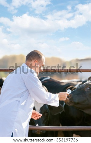 portrait of a veterinarian doctor on a farm cattle  - stock photo