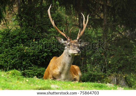 Portrait of a wild deer - stock photo