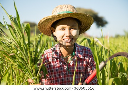 Portrait of a young Burmese girl farmer with thanaka powdered face harvesting in field.