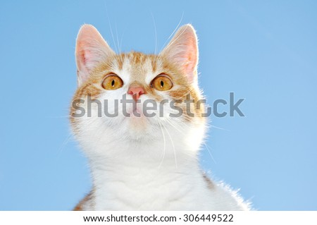 Portrait of a young cat against a blue sky - stock photo