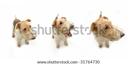 Portrait of a young (puppy) dog. Isolated on white background.