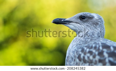 Portrait of a young sea gull