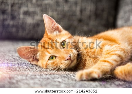 Portrait of adorable red kitten - stock photo