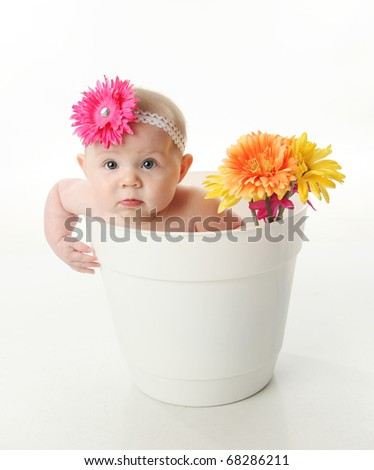 Portrait of an adorable baby girl sitting in a white flower pot along with bright gerbera daisies - stock photo