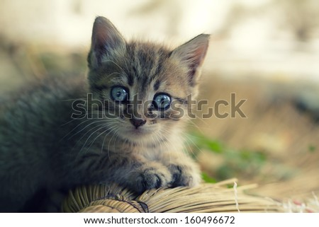 Portrait of an Adorable Kitten Outdoors - stock photo