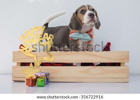 Portrait of an adorable puppy blue beagle in concept of new year celebration (Selective focus Point) - stock photo