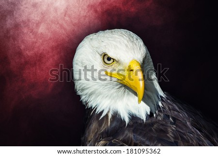 Portrait of an American bald eagle over red smoky background