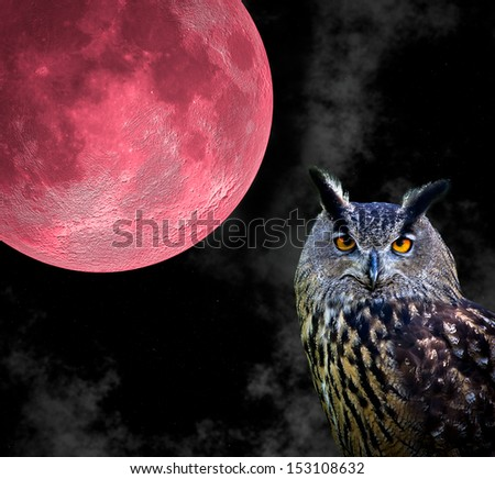 portrait of an owl with a red moon background - stock photo