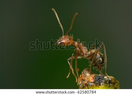 Portrait of ant - stock photo
