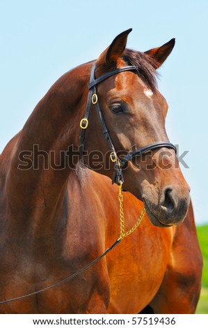 Portrait of bay horse against blue sky