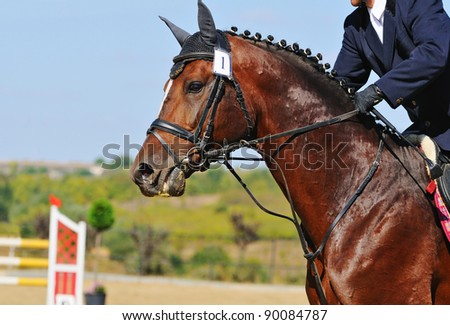 Portrait of bay horse in jumping show - stock photo