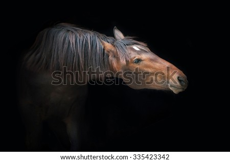 Portrait of beautiful bay horse on the black background
