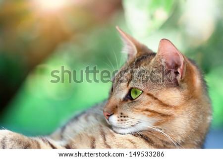 Portrait of beautiful cat - stock photo