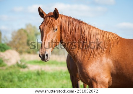 Portrait of beautiful horse on the pasture