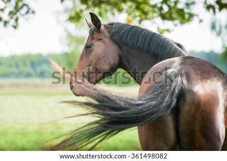 Portrait of beautiful warmblood horse looking back - stock photo